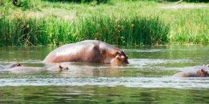 safari-in-oeganda-murchison-falls-national-park_05