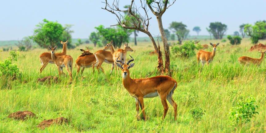safari-in-oeganda-murchison-falls-national-park_08