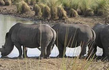 safari-in-oeganda-murchison-falls-national-park_09