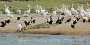 safari-in-oeganda-queen-elizabeth-national-park_02