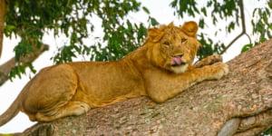safari-in-oeganda-queen-elizabeth-national-park_03