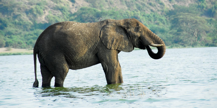 safari-in-oeganda-queen-elizabeth-national-park_05