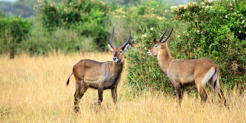 safari-in-oeganda-queen-elizabeth-national-park_06