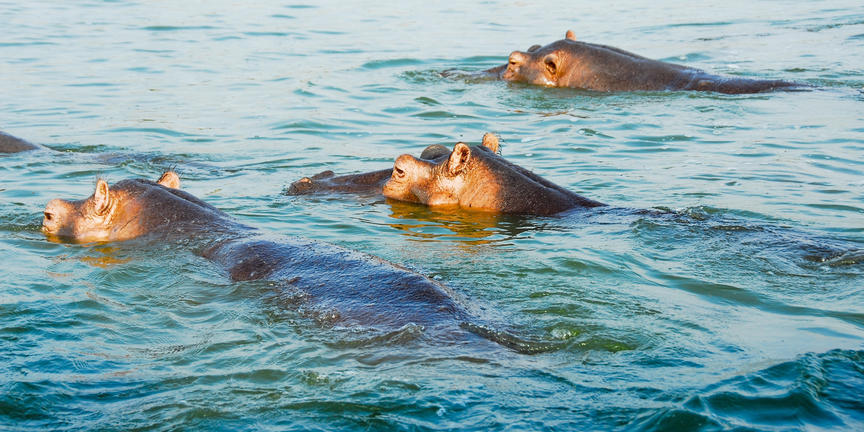 safari-in-oeganda-queen-elizabeth-national-park_07