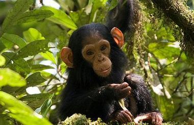 safari-in-oeganda-queen-elizabeth-national-park_08