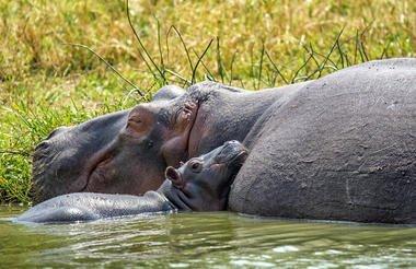 safari-in-oeganda-queen-elizabeth-national-park_11