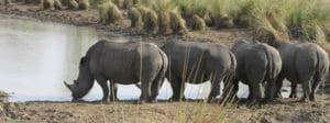 safari-in-oeganda-ziwa-rhino-and-wildlife-ranch_01