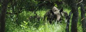 safari-in-oeganda-ziwa-rhino-and-wildlife-ranch_03