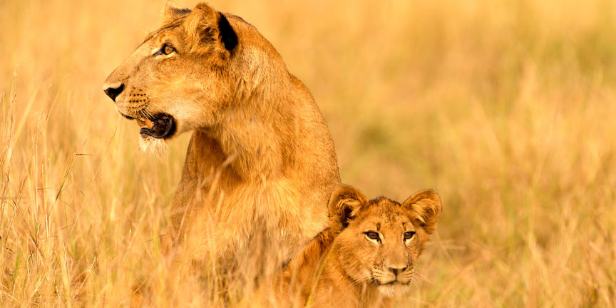 safari-in-oeganda-zuid queen-elizabeth-national-park_03