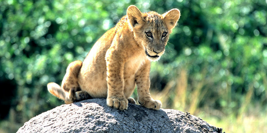 safari-in-oeganda-zuid queen-elizabeth-national-park_04