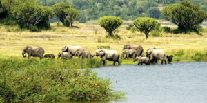 safari-in-oeganda-zuid queen-elizabeth-national-park_05