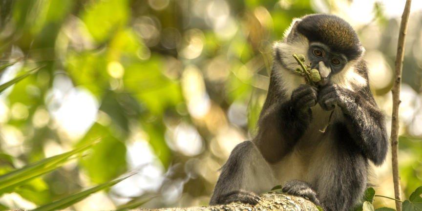 safari-in-oeganda-zuid queen-elizabeth-national-park_06
