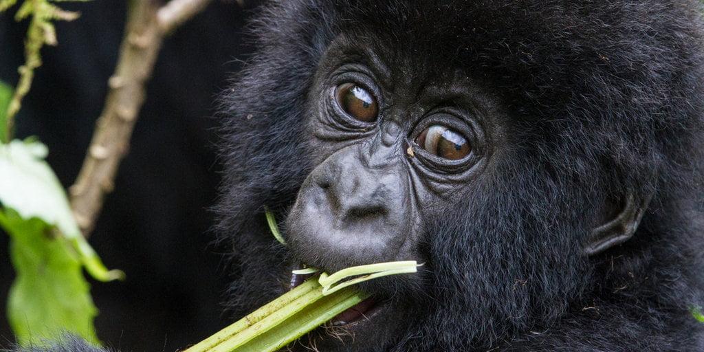 safari-in-rwanda-Virunga_01