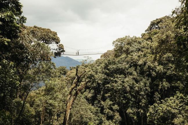 safari-in-rwanda-canopy-walkway_03
