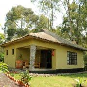 safari-in-rwanda-da-vinci-gorilla-lodge-kinigi_04