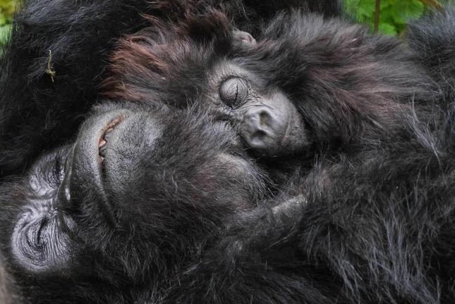 safari-in-rwanda-gorilla-trekking-volcanoes-national-park_03