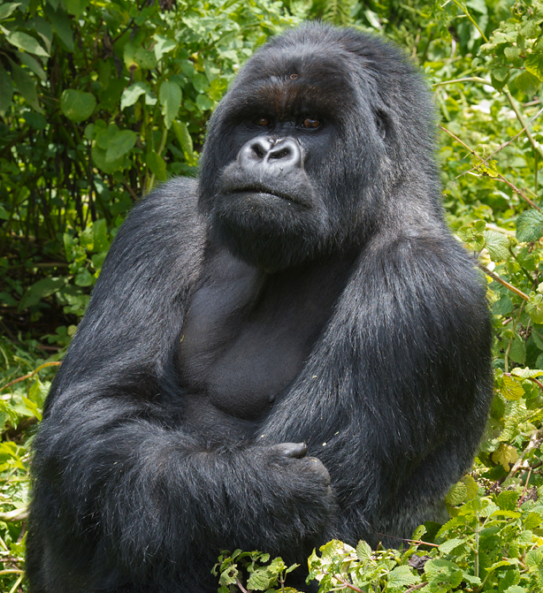 safari-in-rwanda-nyungwe-national-park_13