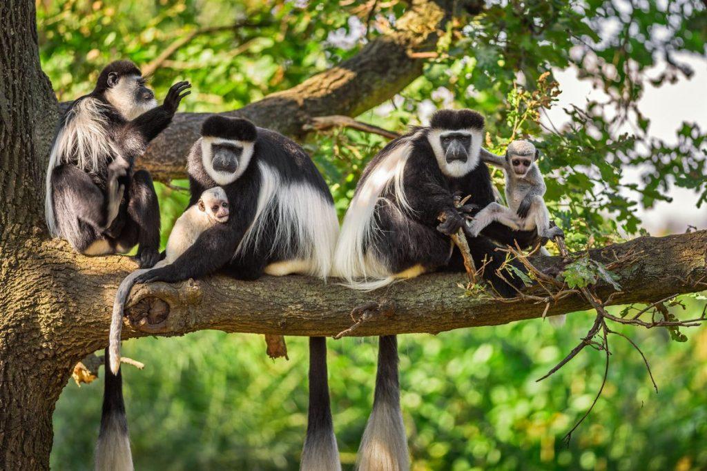 safari-in-rwanda-nyungwe-national-park_16
