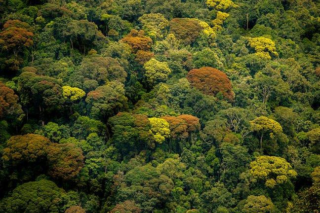 safari-in-rwanda-volcanoes-national-park_01