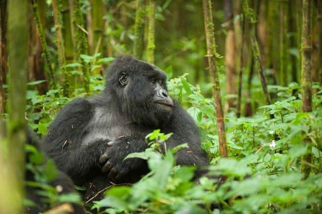 safari-in-rwanda-volcanoes-national-park_07