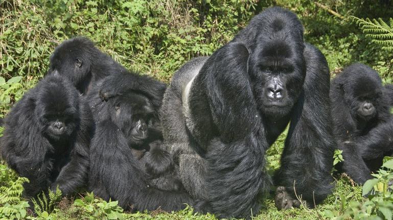 safari-in-rwanda-volcanoes-national-park_13