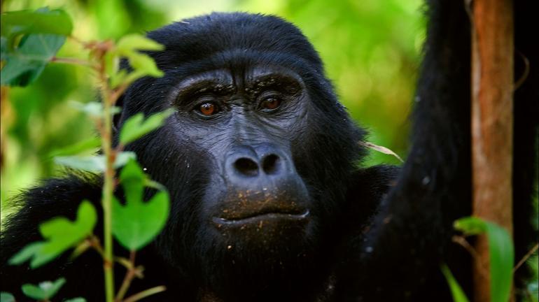 safari-in-rwanda-volcanoes-national-park_14