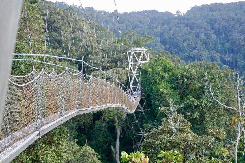 safari-in-rwanda_nyungwe-forest_09