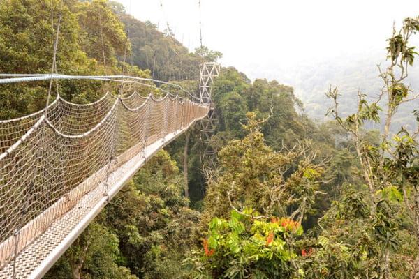 Rwanda: 5 dagen Nyungwe primate tour incl. Chimpansee Trekking & Canopy Walk & binnenlandse vlucht (MS2)