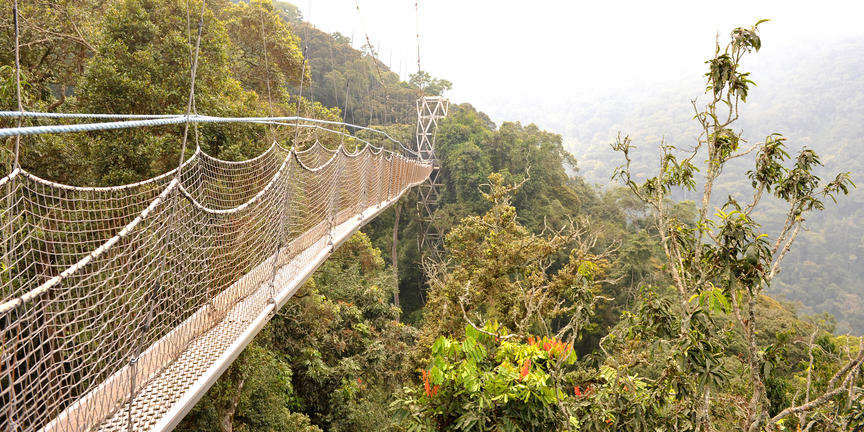 Rwanda: 5 dagen Nyungwe Luxury primate tour incl. Chimpansee Trekking & Canopy Walk & binnenlandse vlucht (MS2)