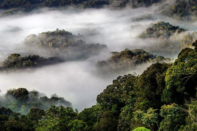safari-in-rwanda_nyungwe-forest_12
