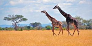 safari-in-tanzania-arusha_04