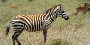safari-in-tanzania-arusha_07