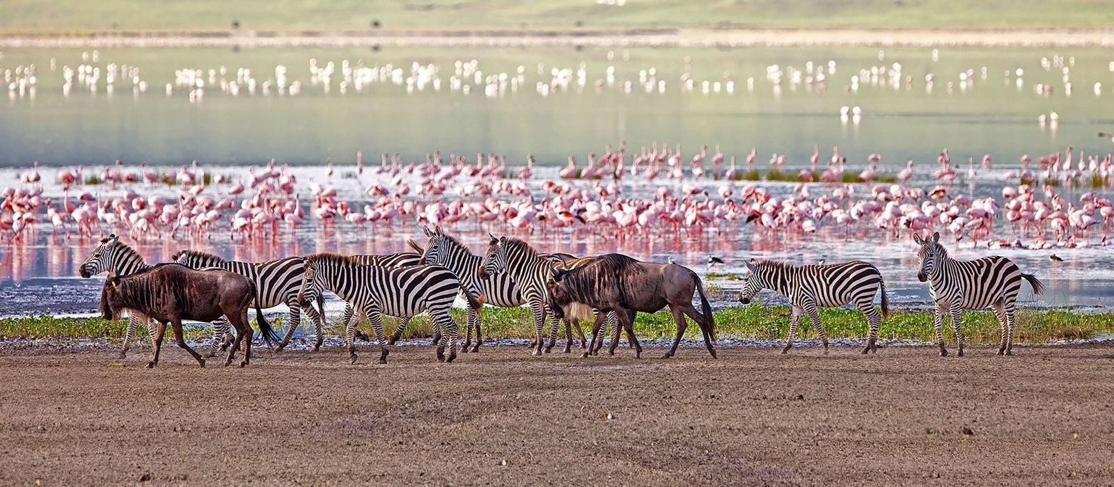 safari-in-tanzania-lake-manyara_01