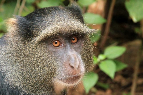 Tanzania: 6 dagen Twende Tanzania Safari (MS5)