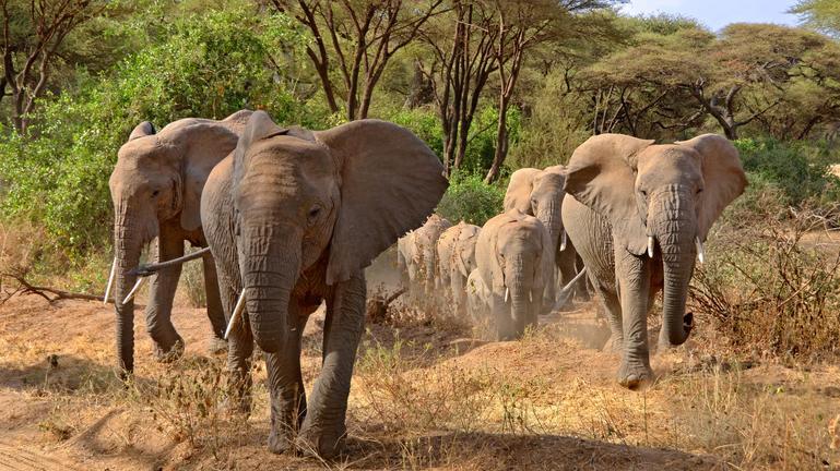 safari-in-tanzania-lake-manyara_02