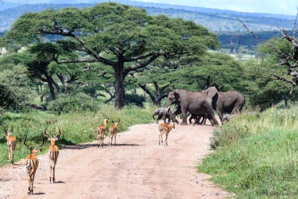 Tanzania: 5 dagen Adventure Safari incl. Hotel bij aankomst (PSC 008)