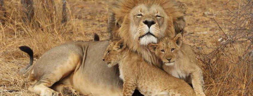 safari-in-tanzania-lake-manyara_04