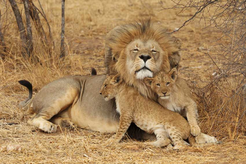 Tanzania: 3 dagen Adventure Safari (P1)