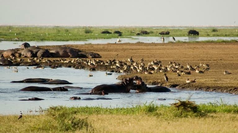 safari-in-tanzania-lake-manyara_05