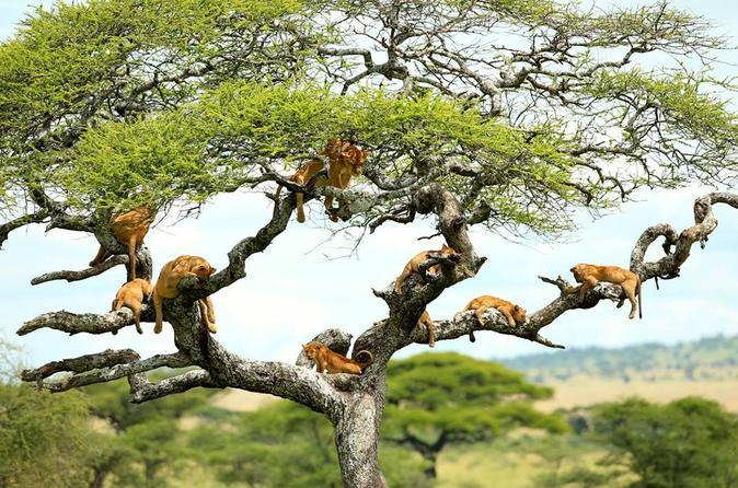 safari-in-tanzania-lake-manyara_06