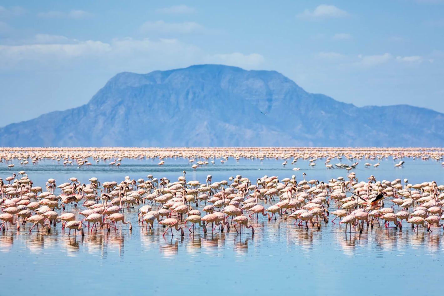 safari-in-tanzania-lake-natron_03
