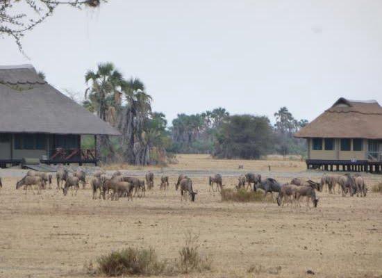Maramboi Tented Lodge @Tangire – Tanzania