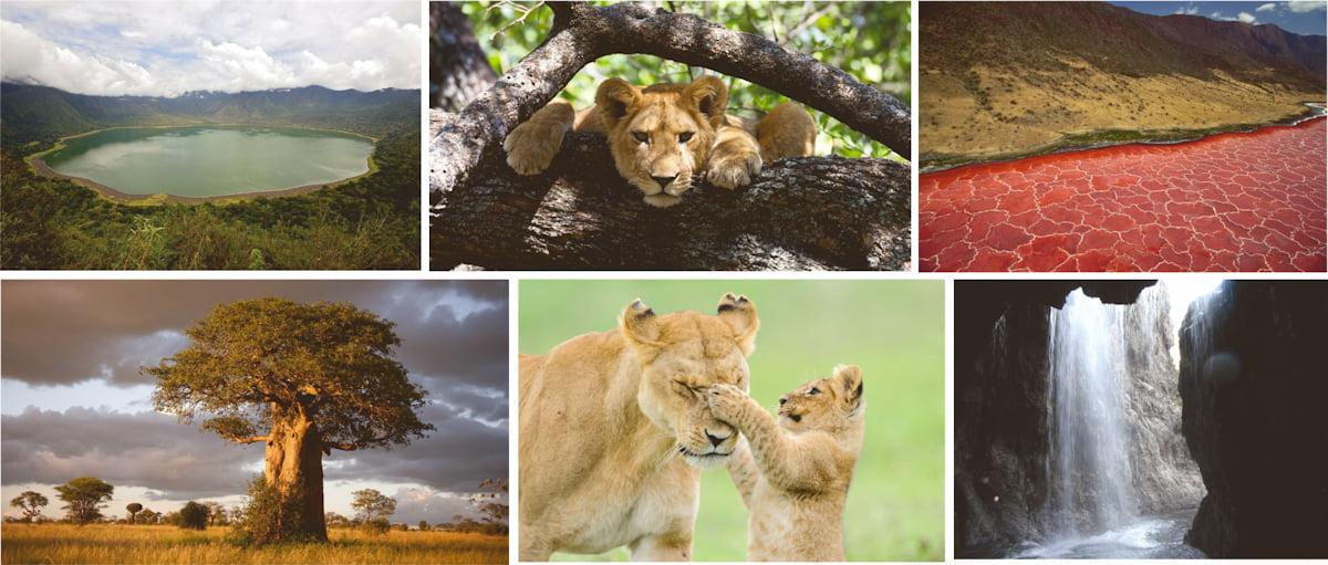 safari-in-tanzania-multi-portrait