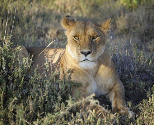 safari-in-tanzania-ndutu area_11