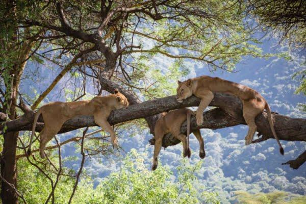 Tanzania: 5 dagen Adventure Safari