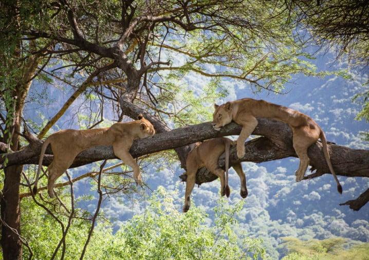 Tanzania: 5 dagen Adventure Safari (P4)