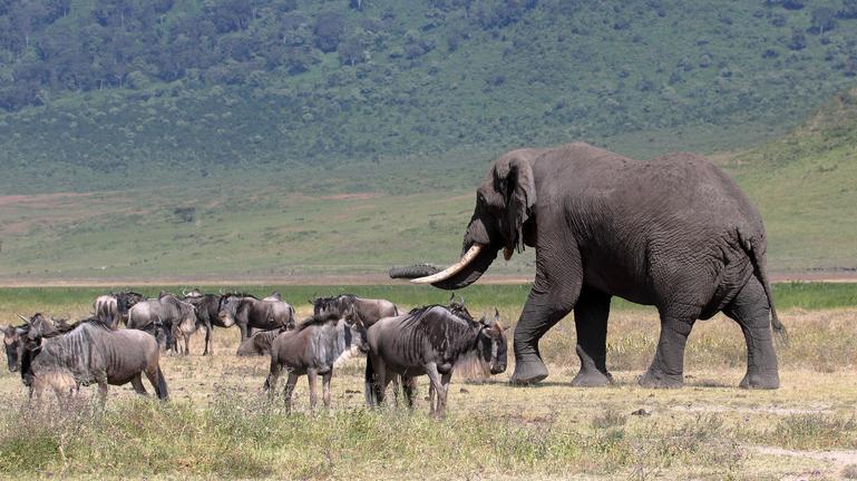 safari-in-tanzania-ngorongoro-region_02