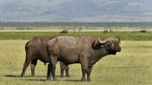 safari-in-tanzania-ngorongoro-region_03