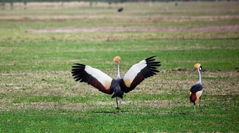 safari-in-tanzania-ngorongoro-region_04