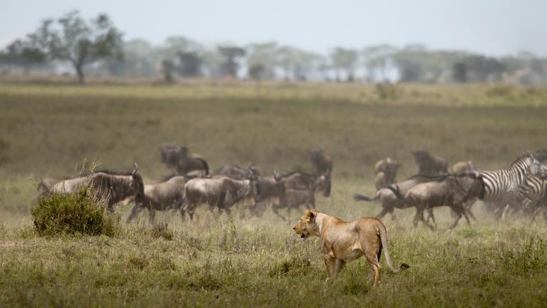 safari-in-tanzania-northern-serengeti_01